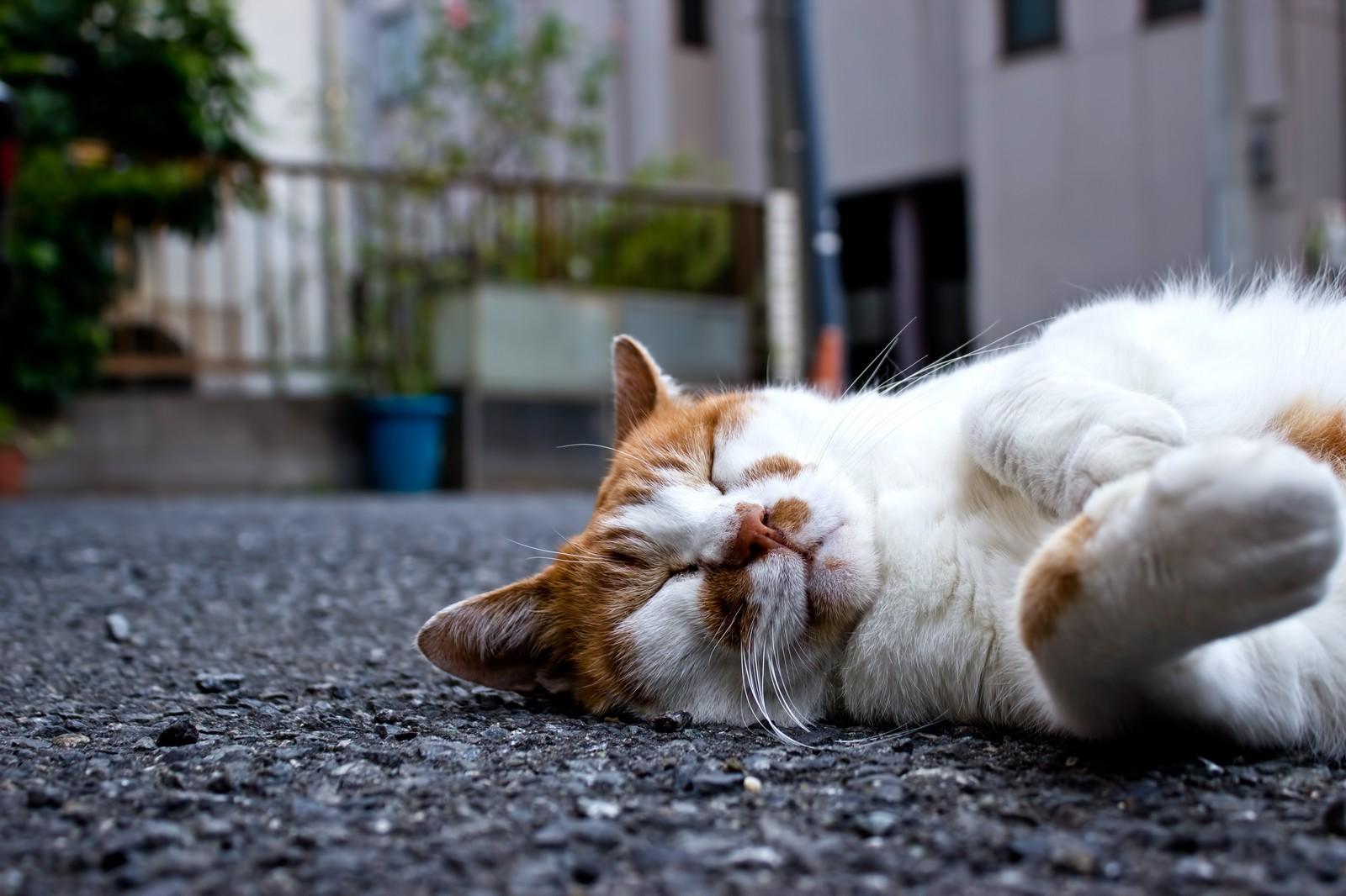 睡眠時無呼吸症候群について解説
